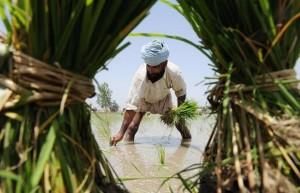 Sikh Farmer