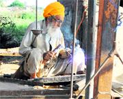 Septuagenarian Balbir Singh at his shop near the bus stand at Goindwal in Tarn Taran.